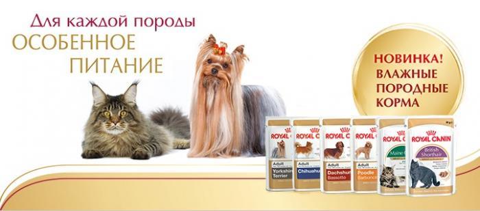 Класса кормов для кошек - в чём разница? | Кошки